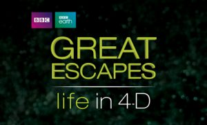 Great Escapes 4D Experience