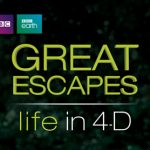 Grest Escapes: Life in 4-D