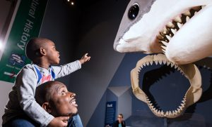 South Carolina State Museum, Megalodon, Natural History